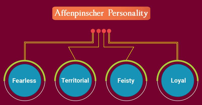 Affenpinscher Personality Chart