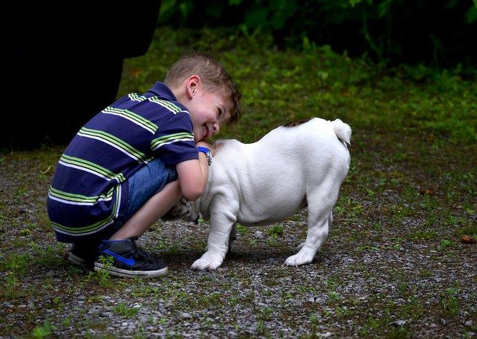 Bulldog with Kids