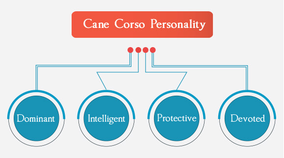 Cane Corso Personality