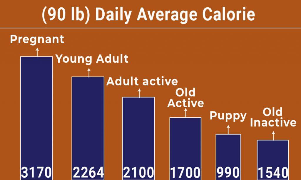 Cane Corso diet chart