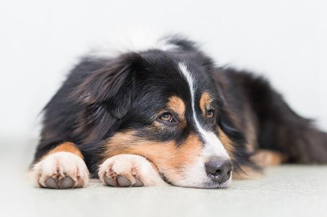 dog psychology facts