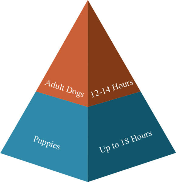 dogs sleeping schedule
