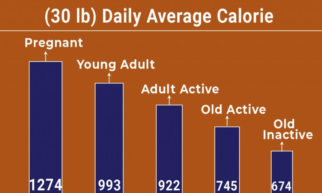 Dachshund diet chart