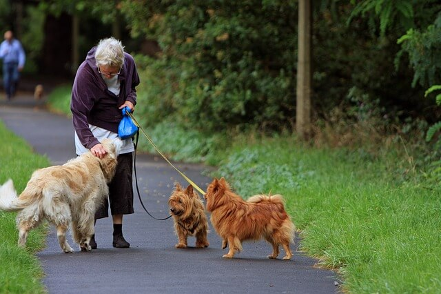 Exercise One of the Basic Dog Care Tips