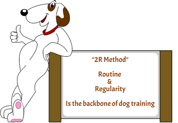 Dog Training Routine & Regularity