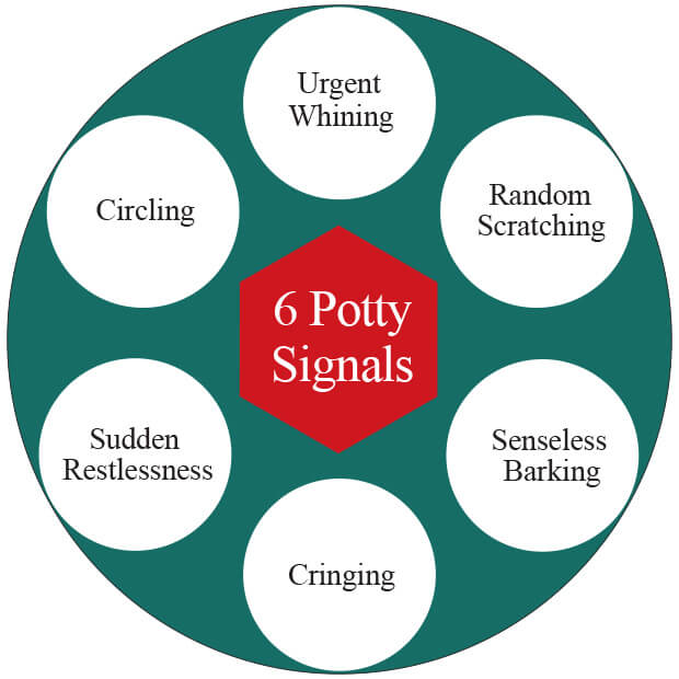 6 Dog Potty Signals Infographic