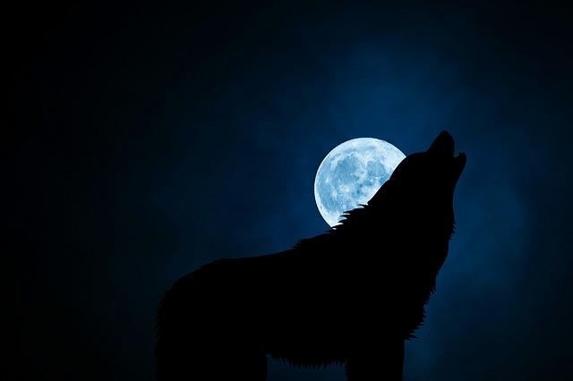 Stop dog barking at night