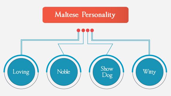 Maltese personality