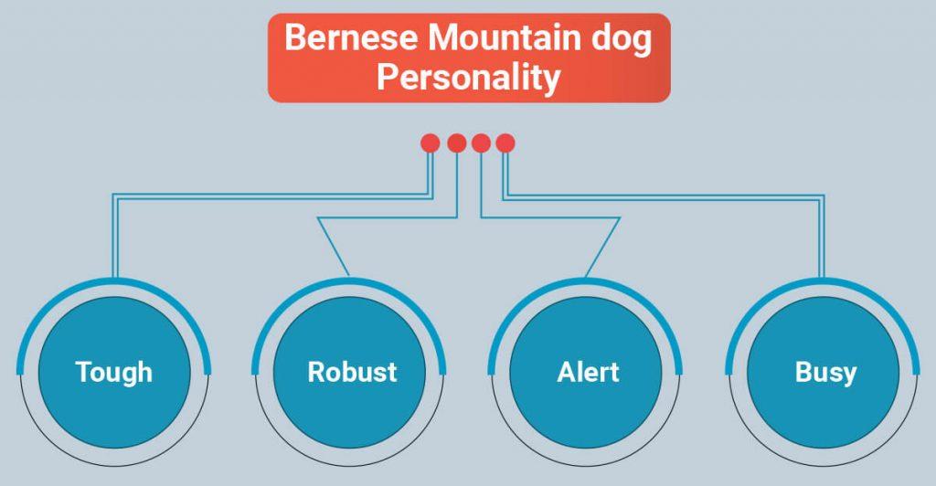 Bernese Mountain dog personality