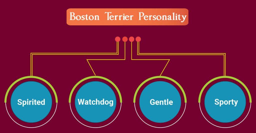 Boston Terrier Personality