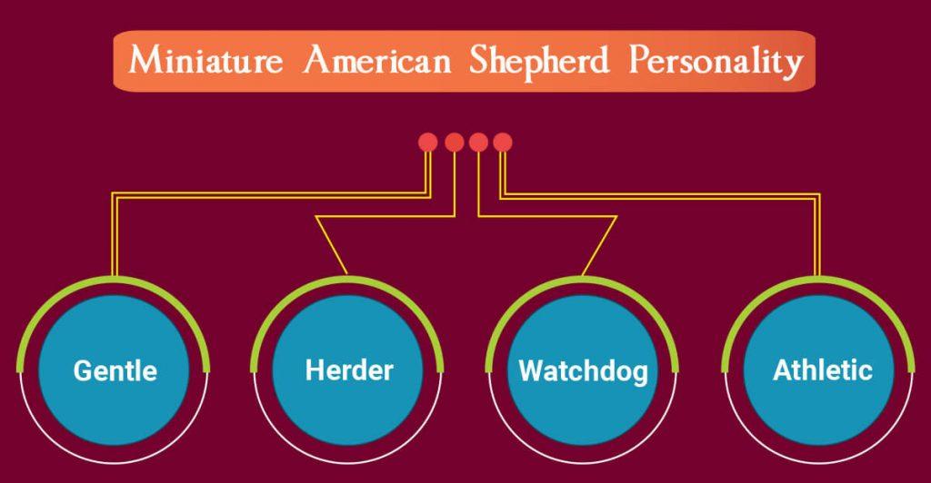 Miniature American Shepherd Personality