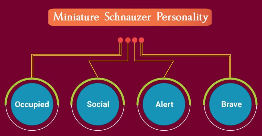 Miniature Schnauzer personality