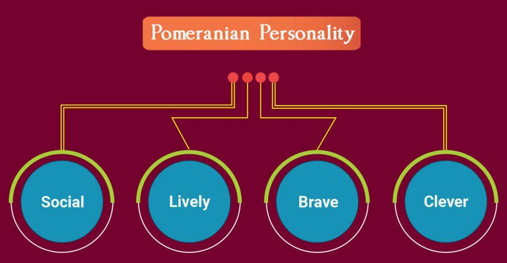 Pomeranian Personality