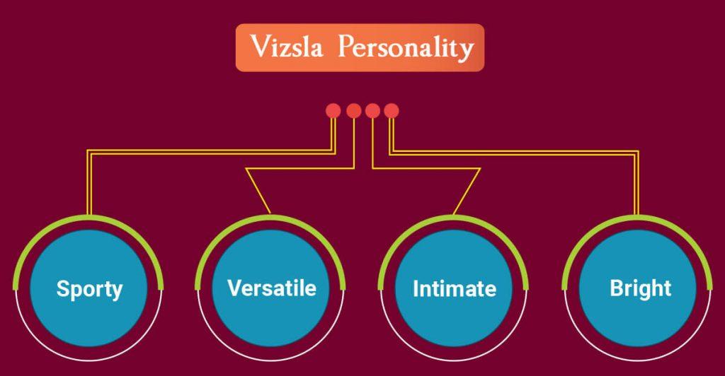 Vizsla personality