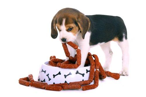 Feed a Puppy