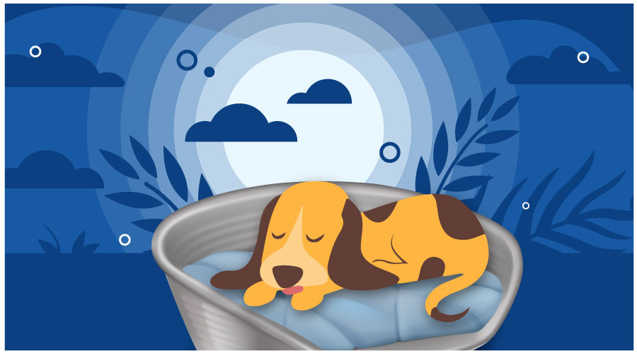 Dog Beds for Hip Dysplasia
