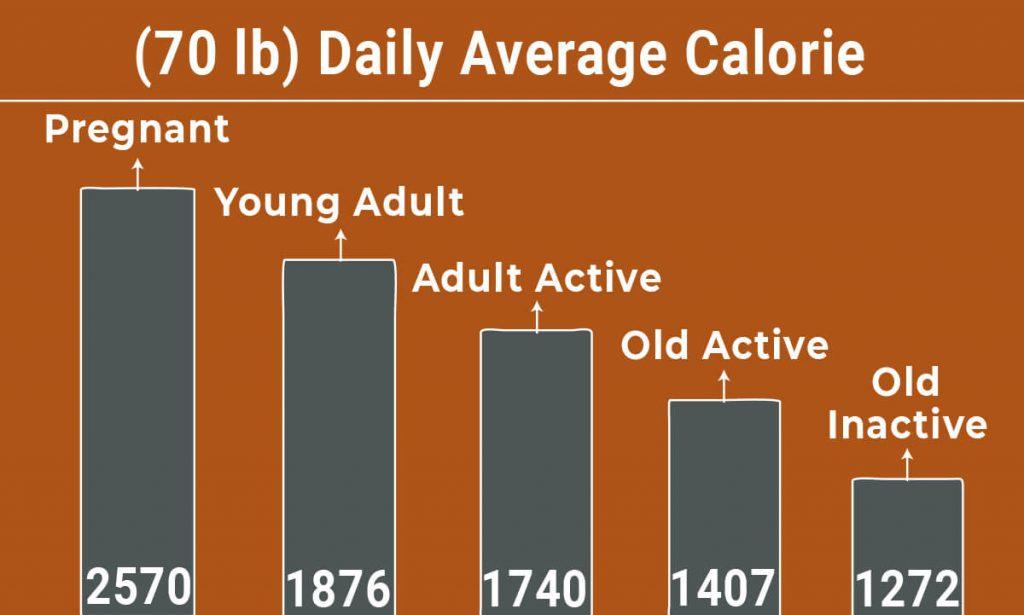 Saint Bernard Diet Chart